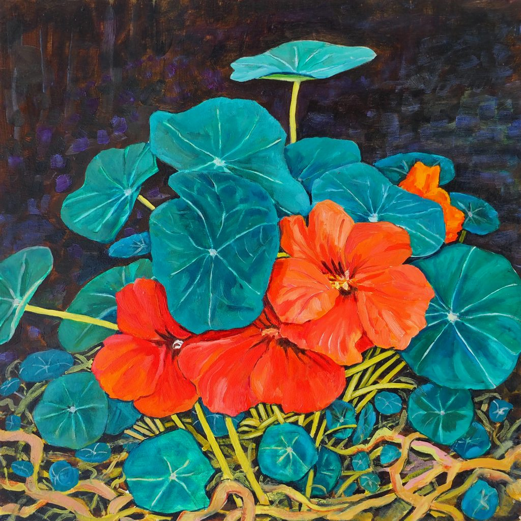 Nasturtium in shade 30x30cm oil on board $450