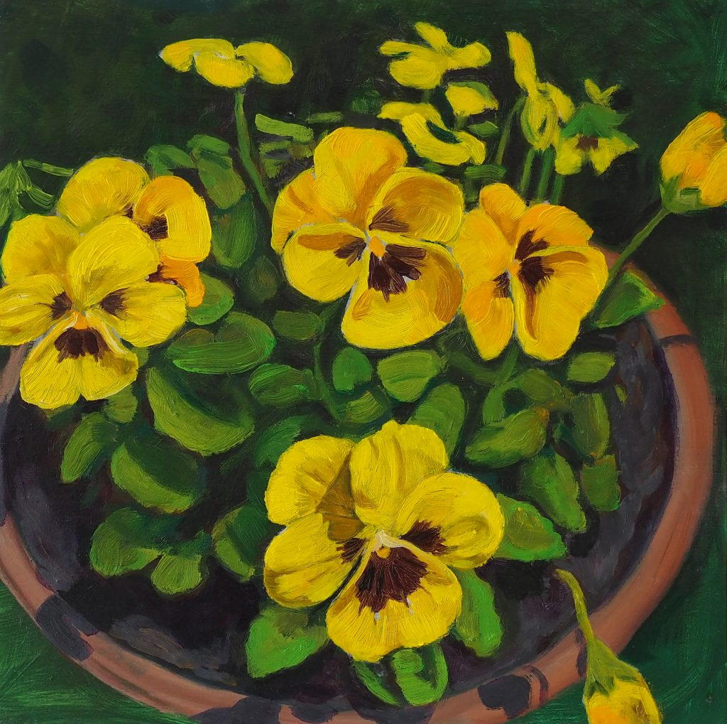 Potted Viola 25x25cm oil on board $400